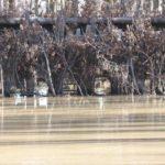 2012_southern_illinois_duck_hunt23