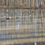2012_southern_illinois_duck_hunt28