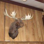 Southern_Illinios_Duck_Hunt_2011_11