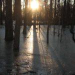 Southern_Illinios_Duck_Hunt_2011_34
